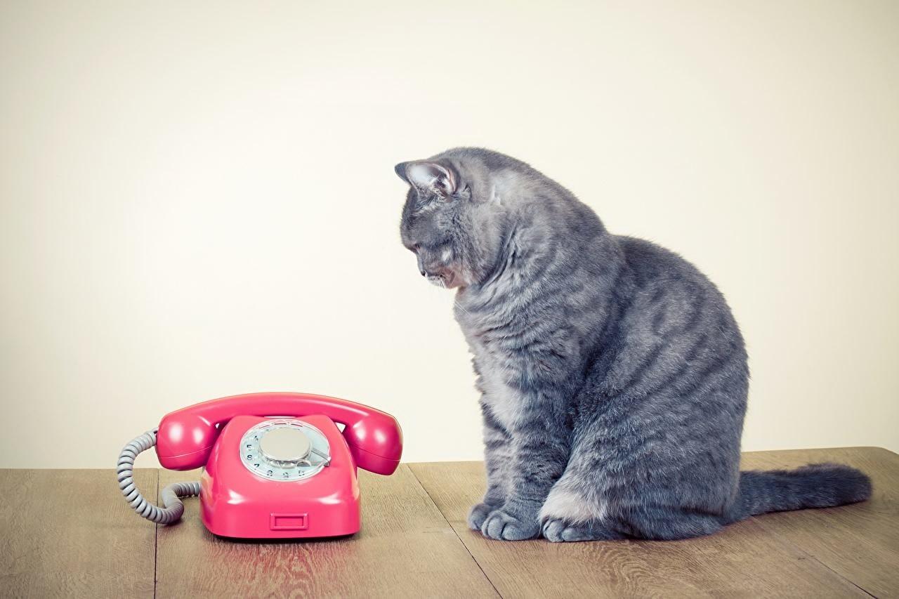 прикольные картинки кошек с телефоном многих вас были