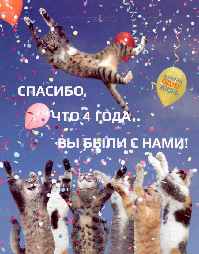 Без чувства, день рождения с котом открытка