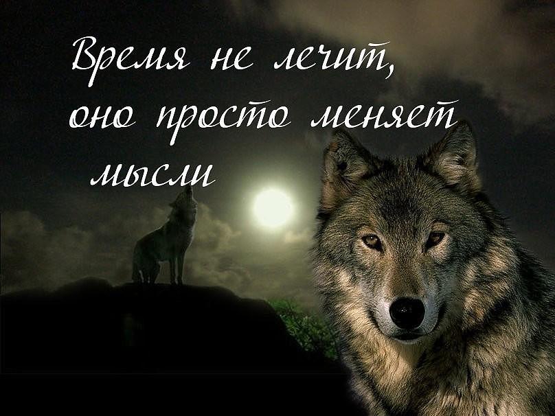 Негром перехочешь, картинка волка с надписью никогда не проигрываю